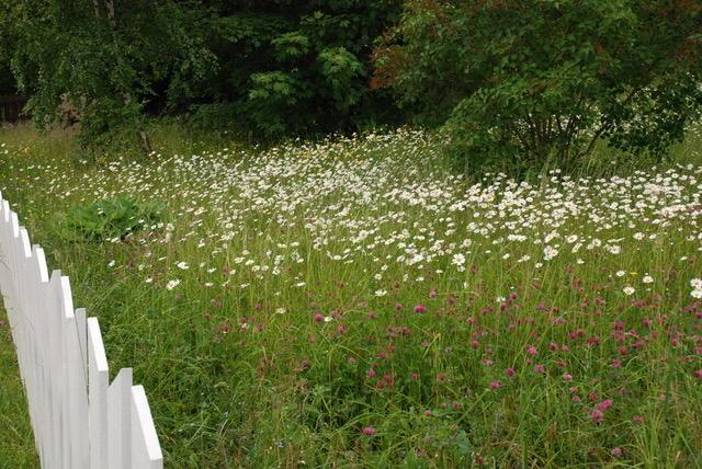 Blomstereng med hvitt gjerde