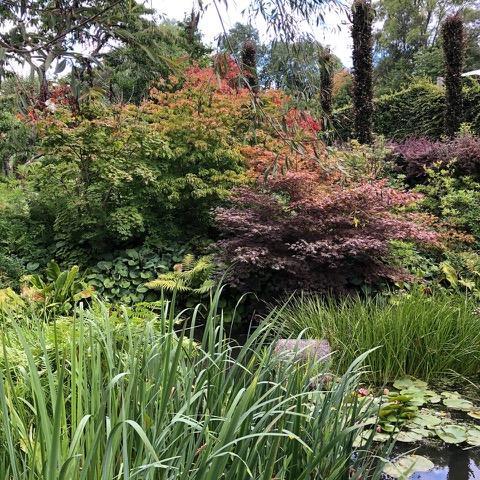 busker med høstfarger