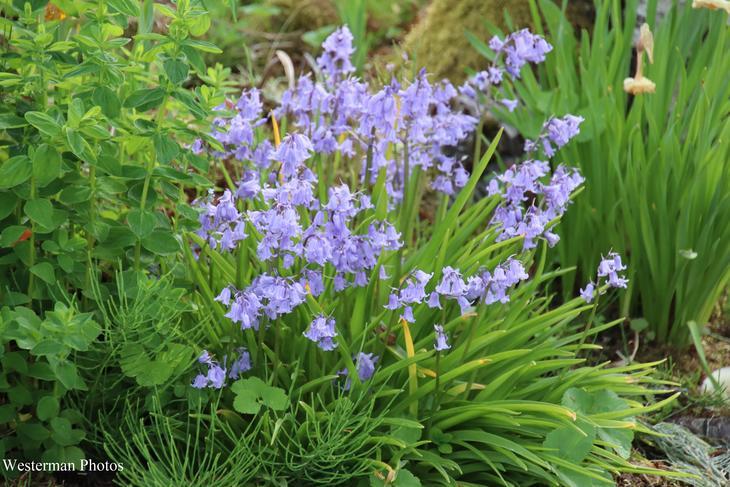 Fint med masse blå blomster.