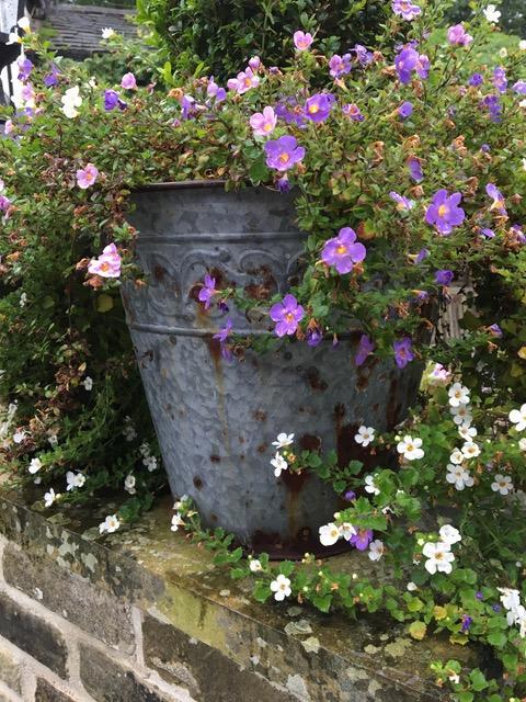 Rosa og lilla sommerblomster i en stor potte