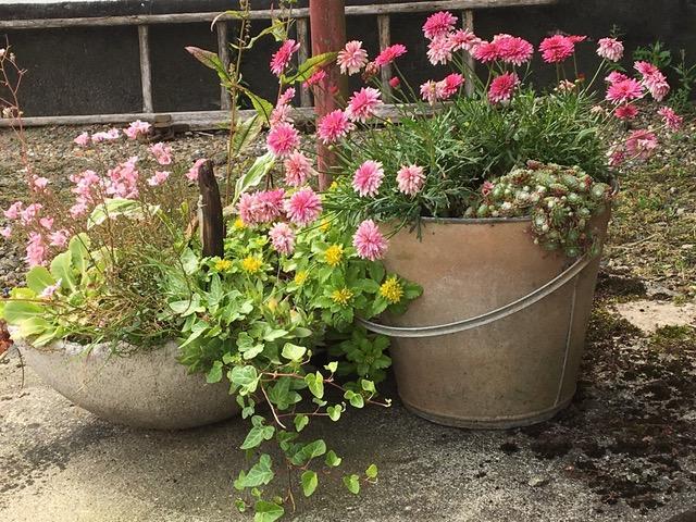Sommerblomster i rustikke potter