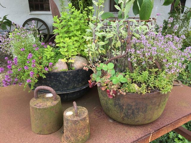 Gamle gjenstander og rust, plantes til med krydderurter og blomster.