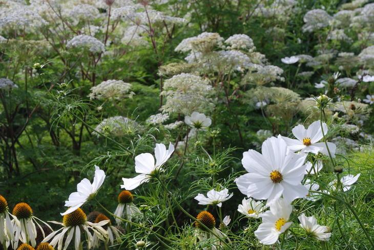 bed med hvite blomster
