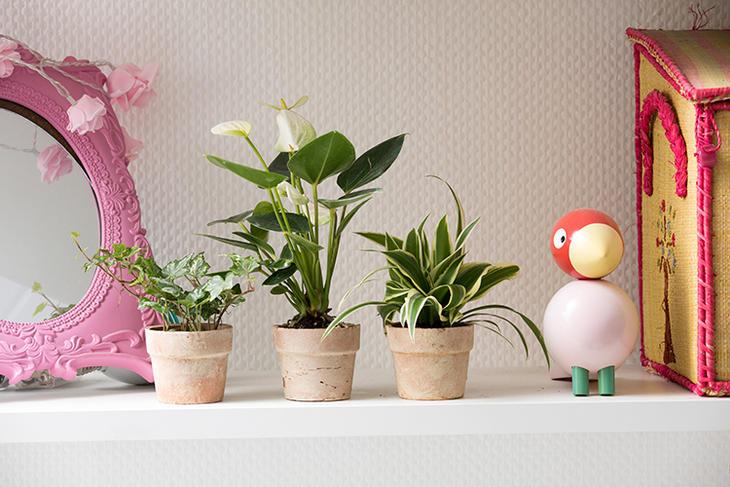 Tre potter med grønne planter på en hylle med ulik pynt i rosafarget.