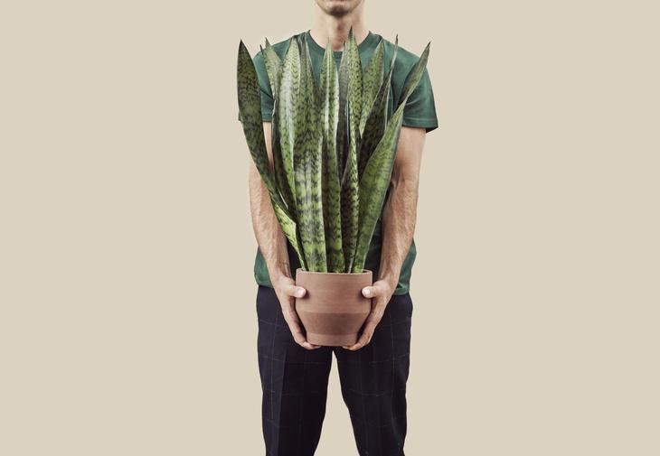 Mann som holder en stor bajonettplante.