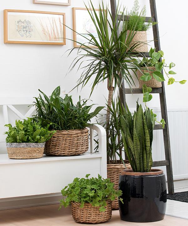 Ulike grønne planter i et lyst rom.