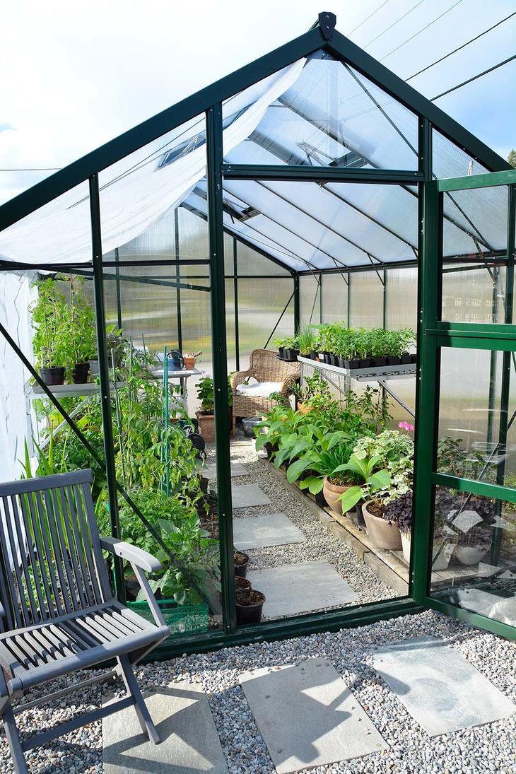 Et veksthus fult av planter med døren oppe. På gulvet ligger grus og skiferheller.