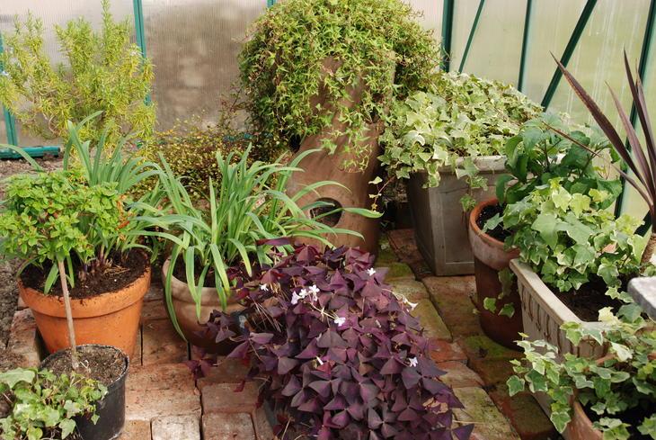 Eksotiske planter på vent i et veksthus. Snart skal de plantes ut.
