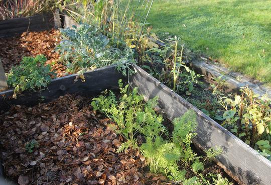 jorddekke med løv