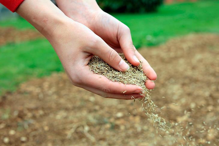 Gressfrø kan du kjøpe i hagesenteret. Velg den blandingen som passer best til formålet.