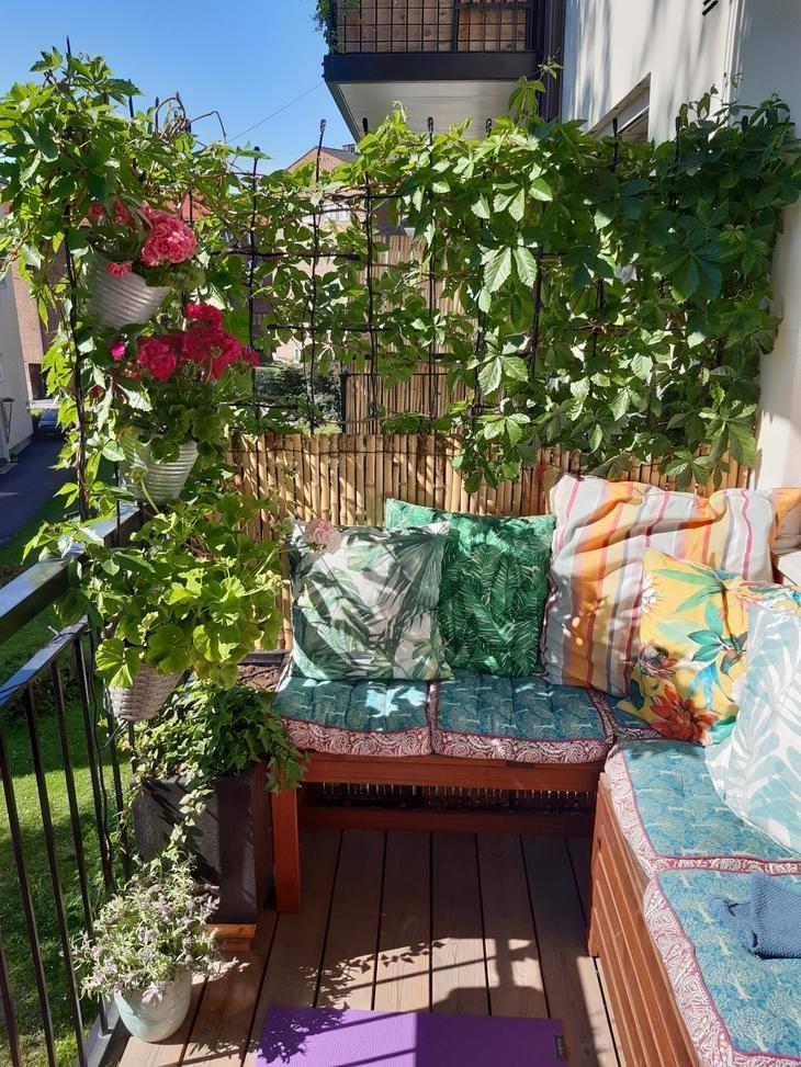 Balkong med benk, potter, villvin, bambuslevegg.