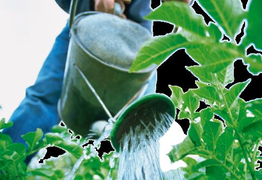 Bilde av vanning av planter med kanne