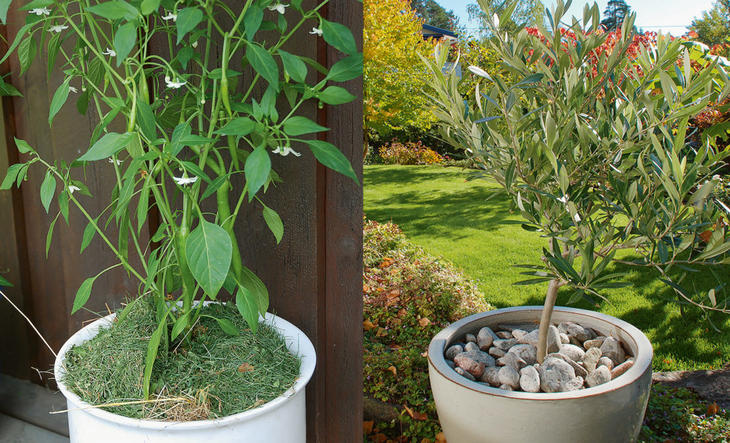 To planter dyrket i potter med jorddekke; gress og dekorstein.