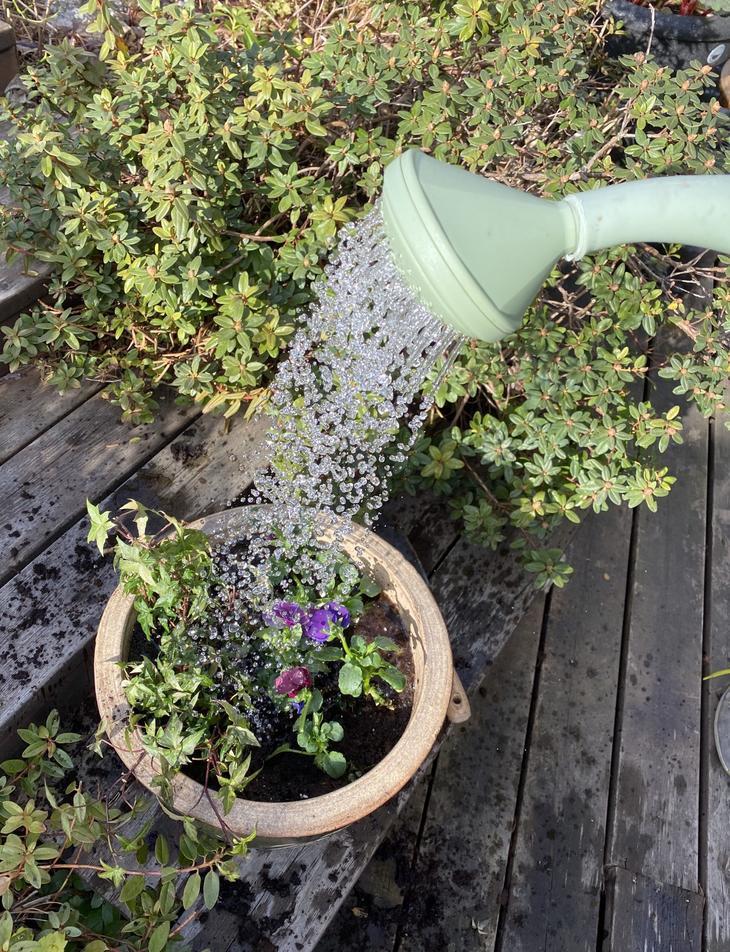 Vanner nyplantede potter