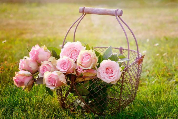 Rosa roser i kurv