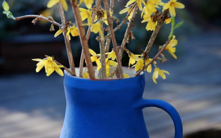 Forsythiakviser i blå vase