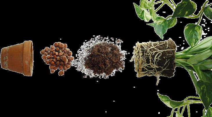 Bilde av potteplante med jord, lecakuler og terracottapotte