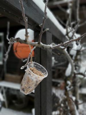 Plastkopper med ferdig fuglemat henges opp