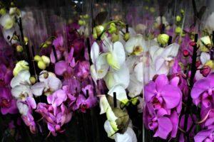 Plastpakket orkide