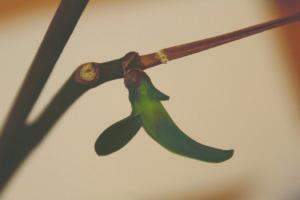 en liten keik, en miniplante