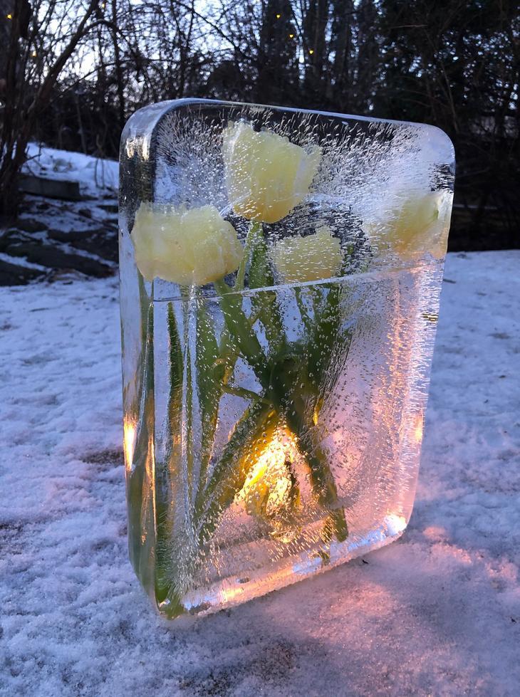 Is-tablå med tulipaner frosset inn i is som et bilde