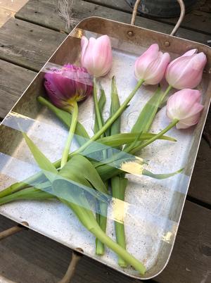 Tulipaner i kjøkkenform venter på vann og kulde