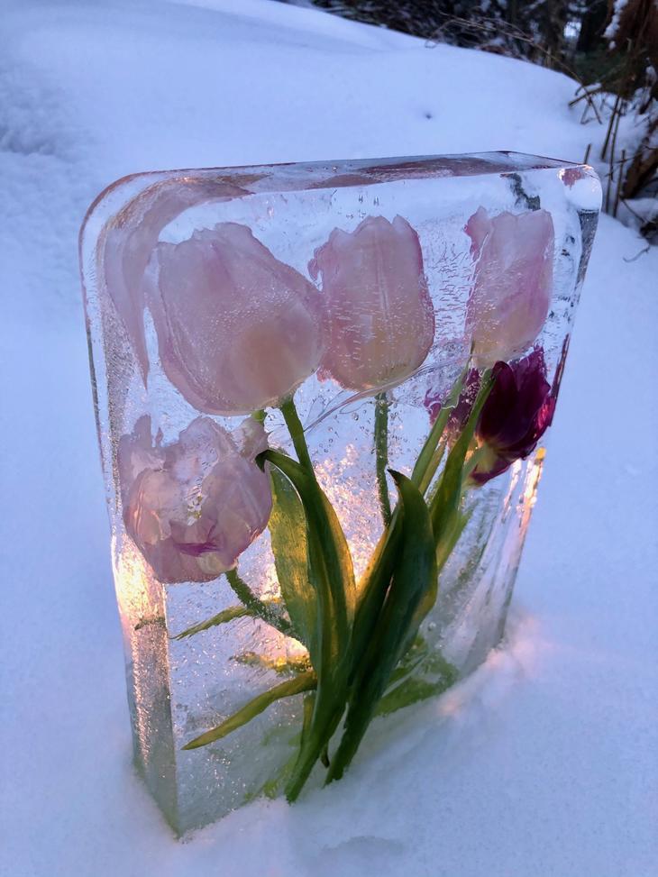 Vakkert is-tablå med rosa og lilla tulipaner.