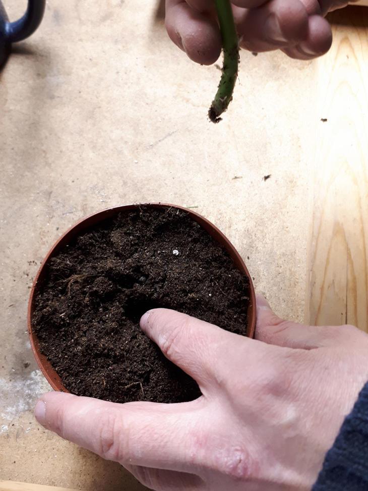 En potte med jord med hull i. Kart til å stikkes.  responsive-focuspoint focus-horizontal-50 focus-vertical-50