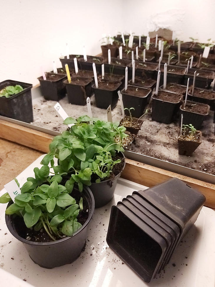 Frøpotter og småplanter på dyringsbrett.