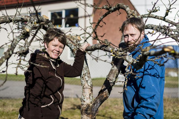 To gartnere står ved et epletre som skal beskjæres.