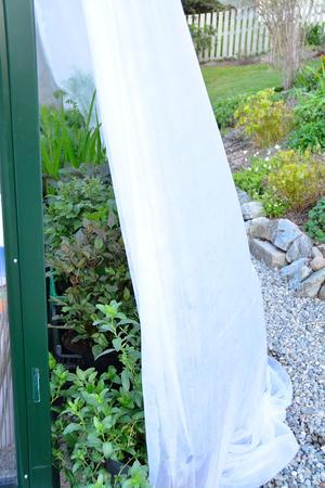 Selvdyrkede planter langs en drivhusvegg, dekket av fiber for å herdes.