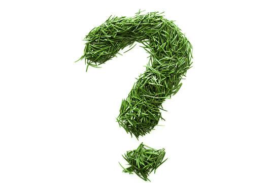 Spørsmålstegn av gress på hvit bakgrunn