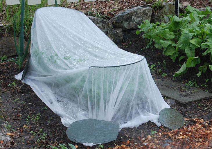 Grønnsaker i grønnsakshagen dekket med en agrylduk, hvit fiberduk.