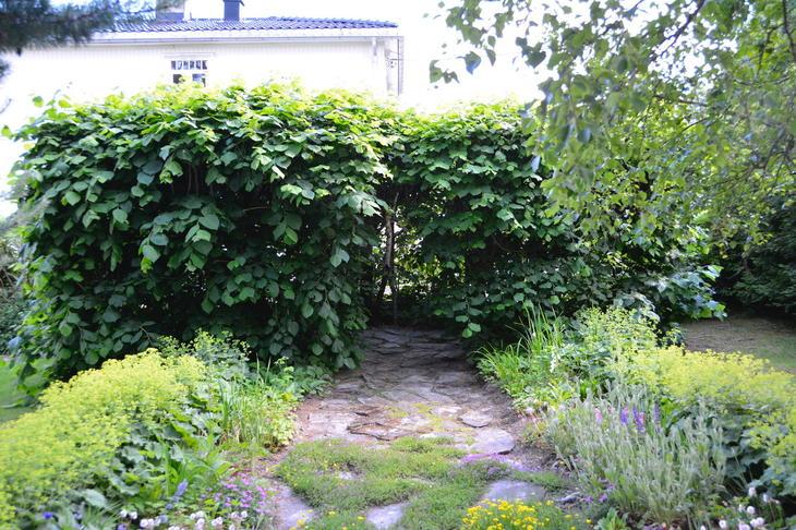 Et grønt lysthus, et hagerom av lindetrær.