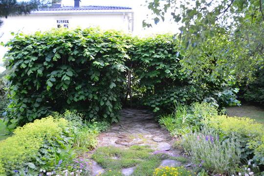 Linetrær plantet så det danner et grønt rom, et lysthus i hagen.
