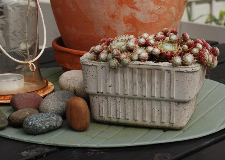 Takløk plantet i et selvstøpt plantekar.