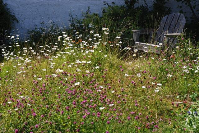 Blomstereng med en gammel hagestol.