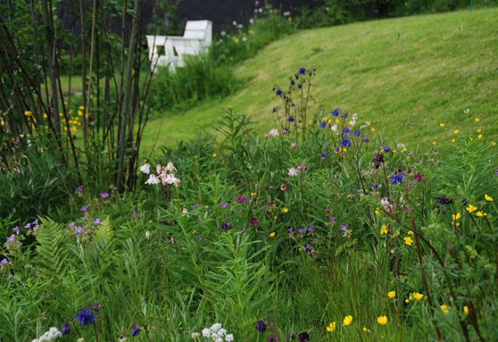 Blomstereng i en skråning med en hvitmalt hagestol